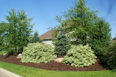 Large berm with trees and shrubs.