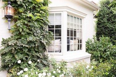 white window with greenery