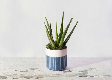 best places to shop for plants online