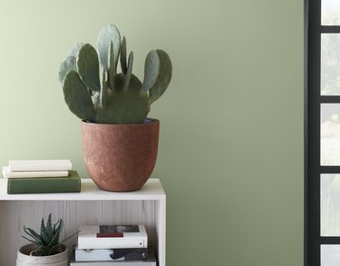 entryway with green wall and cactus plant