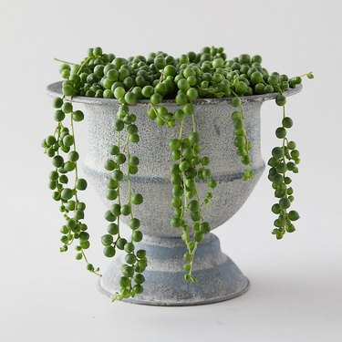 String of pearls in gray goblet-like vase