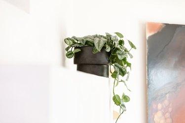 Pothos plant in black planter on white mantel