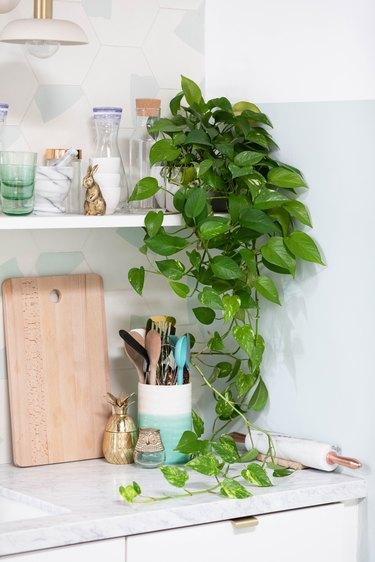 Pothos plant in kitchen