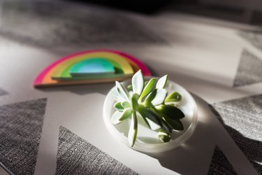 Small succulent on coffee table