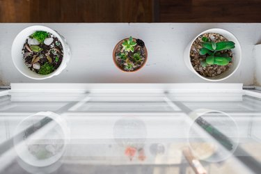 Succulent plants near window