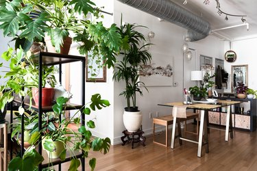 work room with wood floors and overflowing with plants