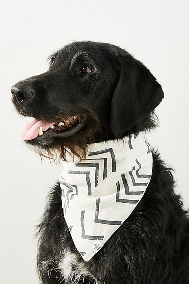 dog with black and white bandanna