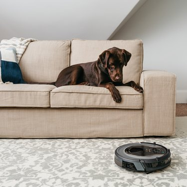 dog on couch looking at Shark ION Robot Vacuum