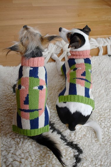 two dogs wearing matching sweaters with faces