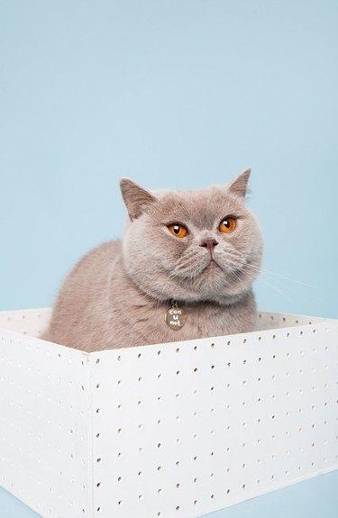 cat collar charm