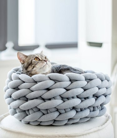 gray cat bed