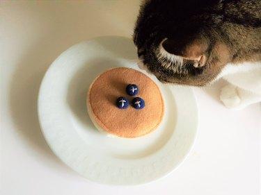 pancake cat toy