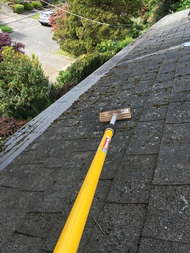 Scrubbing roof moss.