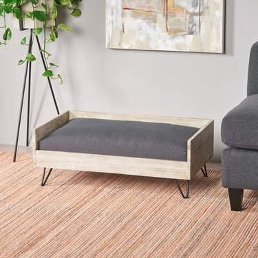 wayfair tucker murphy pet kaylor midcentury dog sofa