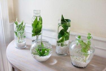 DIY water plants garden