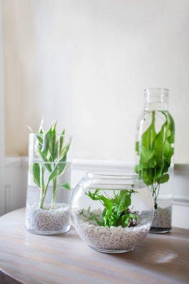 DIY aquatic plants centerpiece