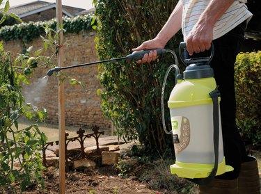 spraying plants with garden sprayer