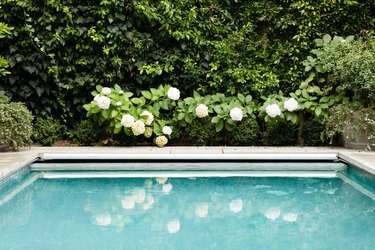 Outdoor idea for backyard with pool and landscaping