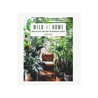 wild at home how to style and care for plants