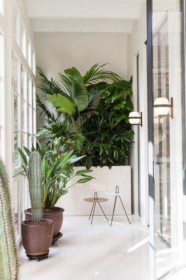 white hallway with plants