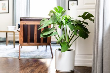 Monstera indoor plant idea with white ceramic planter in modern home