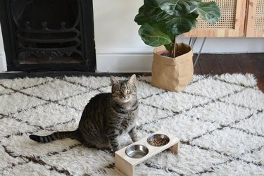 Modern cat feeding station in living room near plant.
