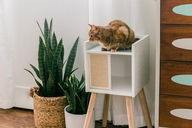 IKEA cat house with wood legs and cat sitting on top.