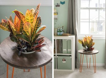 Side table planter with orange hairpin legs.