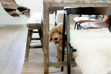 dog looking at camera from underneath kitchen table with rug underneath