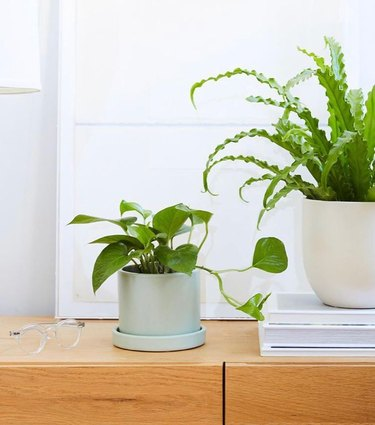 plants in white and mint planters