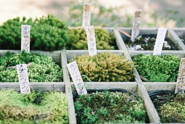Collection of mosses.