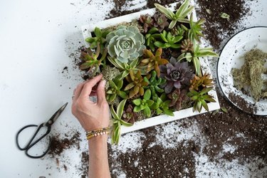 Succulent wall planter using the IKEA Ribba frame.