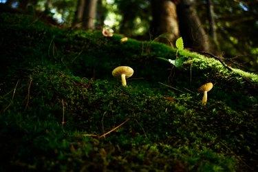 Mushrooms in moss garden.