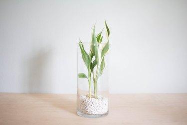 Aquatic plant added to gravel