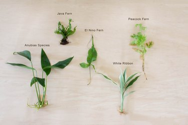 Variety of aquatic plants