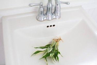 Rinsing gel off plant