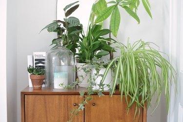 plants on credenza