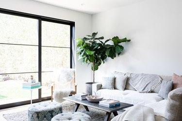 Fiddle-Leaf Tree plant in modern boho living room