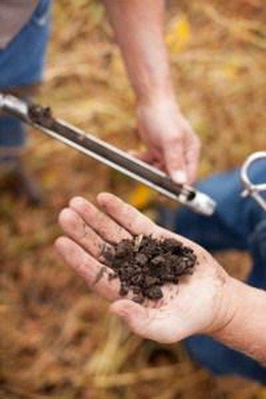 Soil sample.