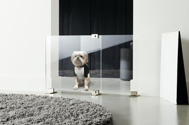 clear acrylic dog door with dog