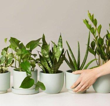 best plant enneagram type