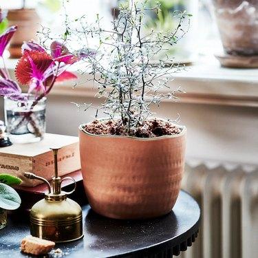 plant pot on black table