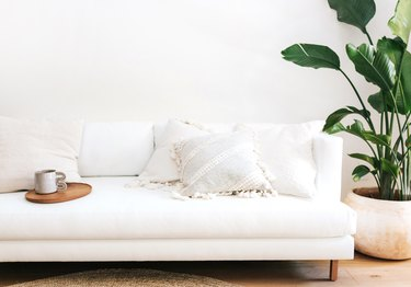 clean white living room with banana palms