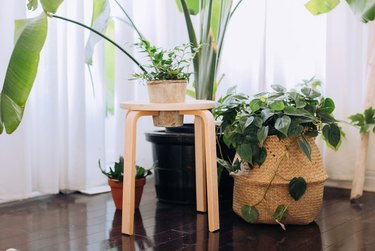 IKEA stool transformed into a planter.