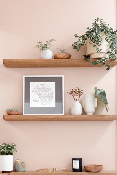 shelves with potted plants, pink background, carefully arranged