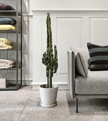 minimalist planter