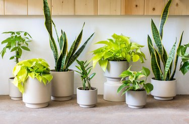 group of plants in different sized planters