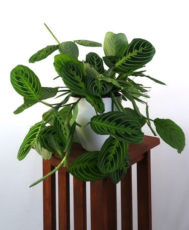 plant on accent table