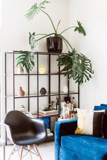Black living room shelving idea with blue velvet sofa