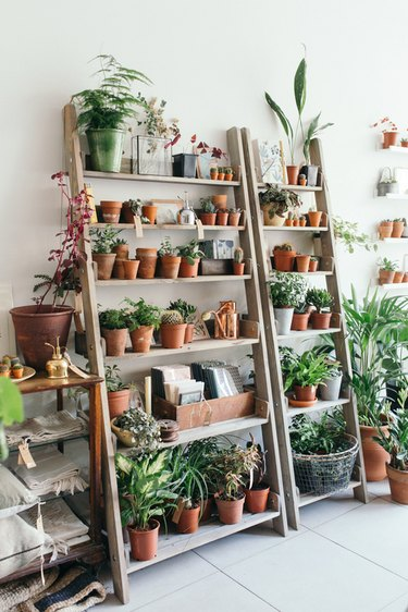 Terracotta planters on a ladder